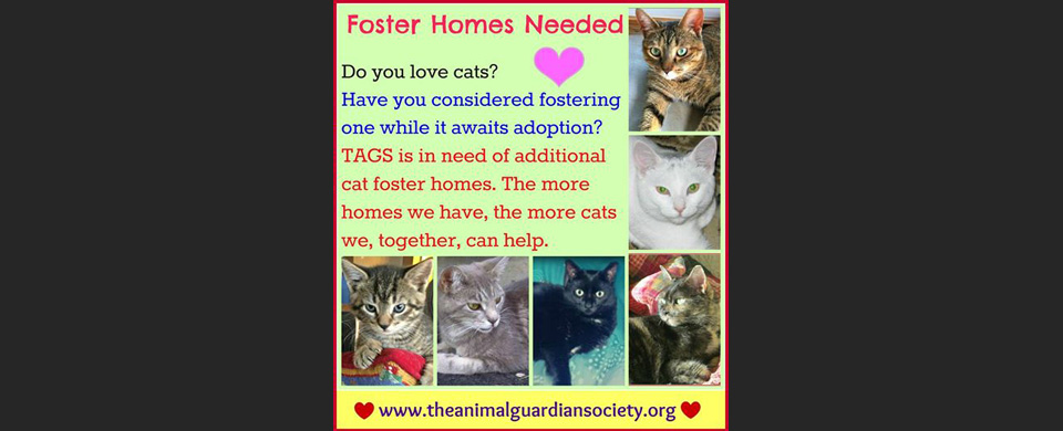 foster homes needed slide