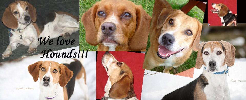 hounds collage slide copy