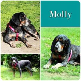 Molly collage