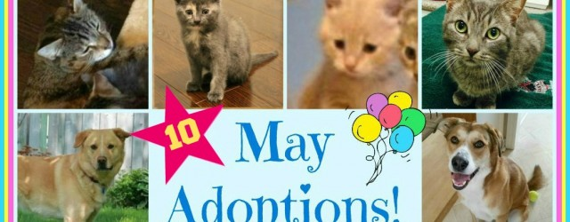 May Adoptions 2015 final one