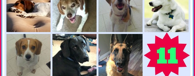 August 2015 Adoptions