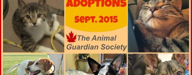 September Adoptions 2015