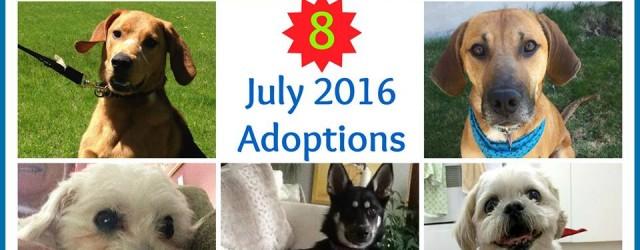 July 16 Adoptions