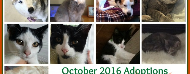 i-october-2016-adoptions-this-one