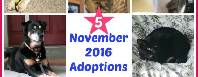 nov-2016-adoptions-this-is-it
