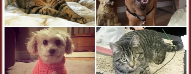 Jan. 2017 adoptions