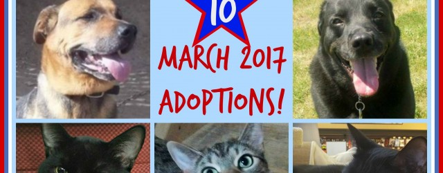 March 2017 Adoptions