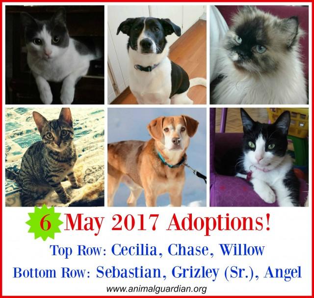 5. May 2017 adoptions 1